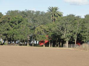 Caballos Criollos San Antonio.