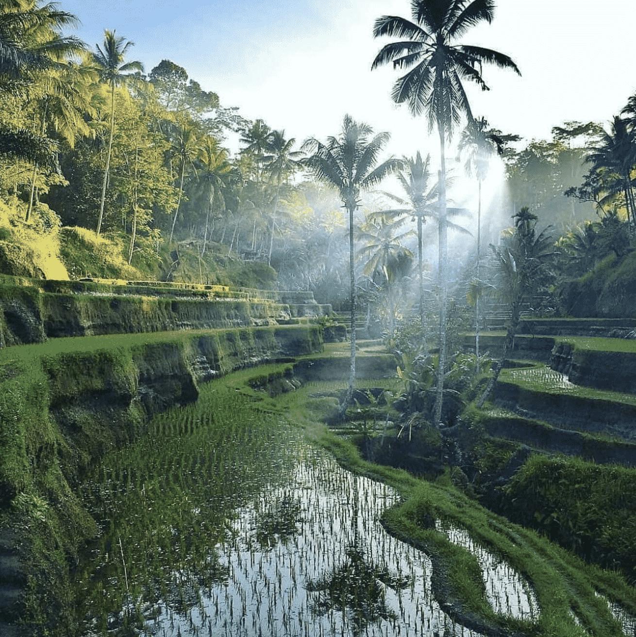 Arrozales cerca de Ubud