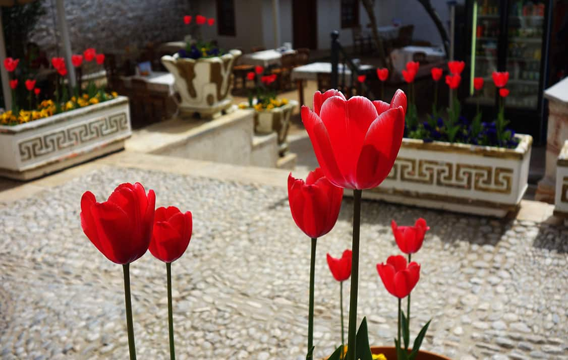 festivales-turismo-estambul-tulipan