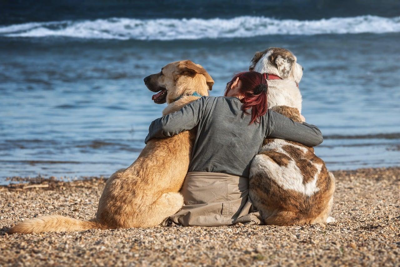 Playas para perros