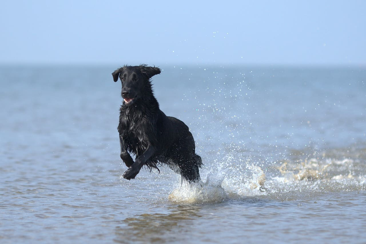 Playas para perros en la Región de Murcia