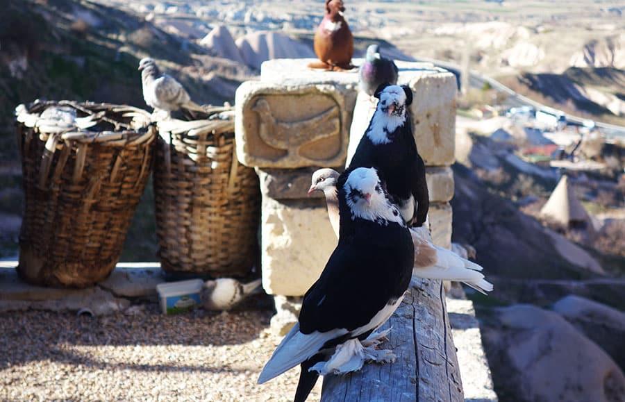 pigeon-valley