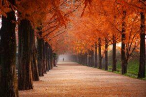 Boboli Florencia otoño