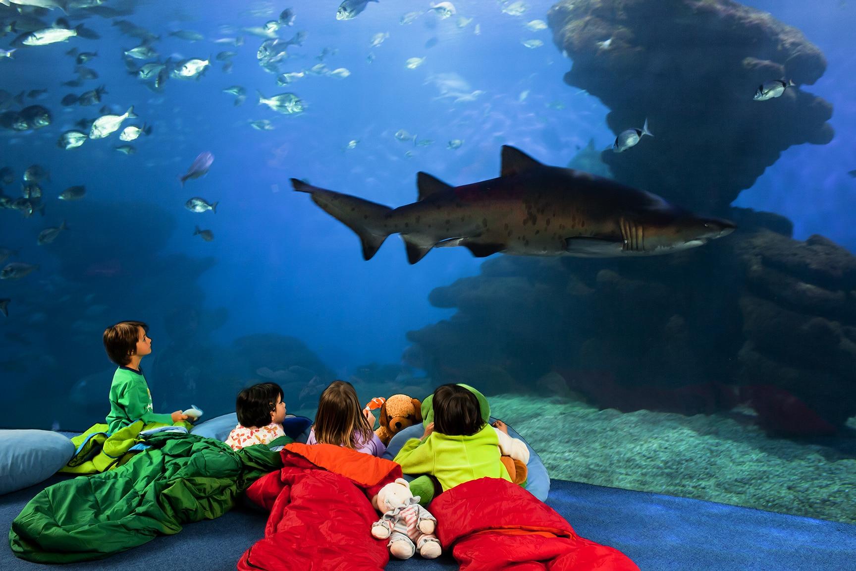 qué hacer en mallorca con niños palma aquarium